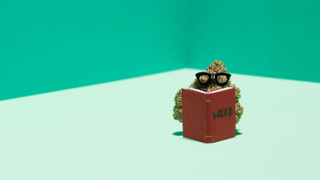 8 weed strains for focused studying